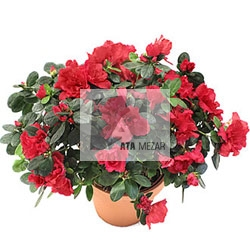 bitki bakımı, çiçek bakımı, çiçek, çiçek siparişi, çiçek gönder